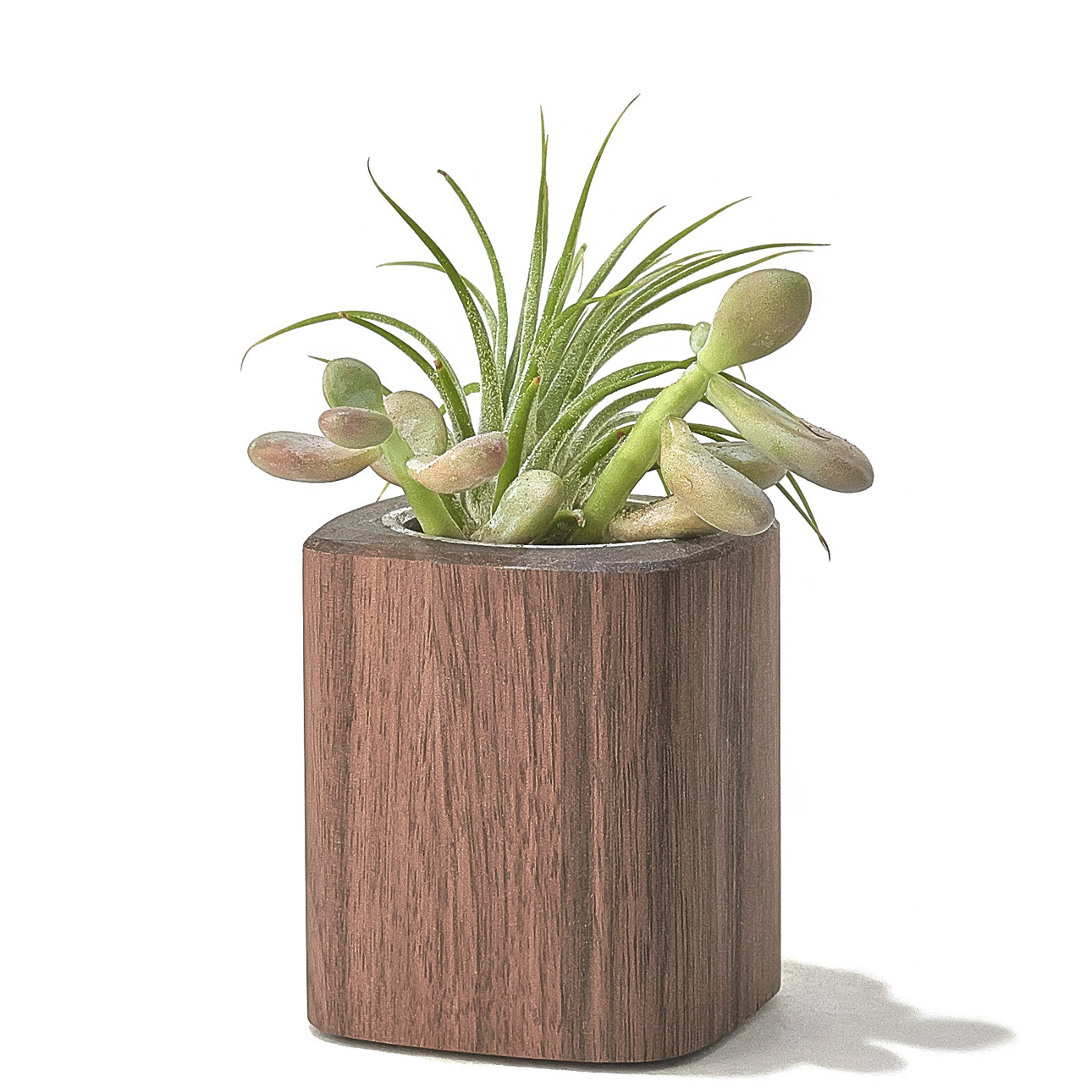 Walnut Planter - TALL