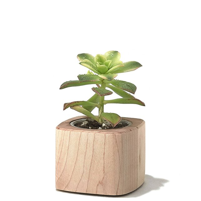 MAPLE PLANTER - SHORT
