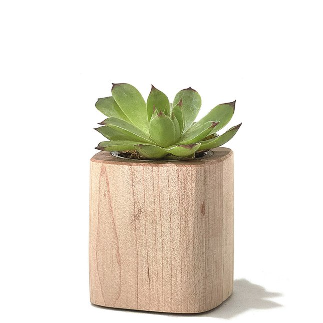 MAPLE PLANTER - TALL